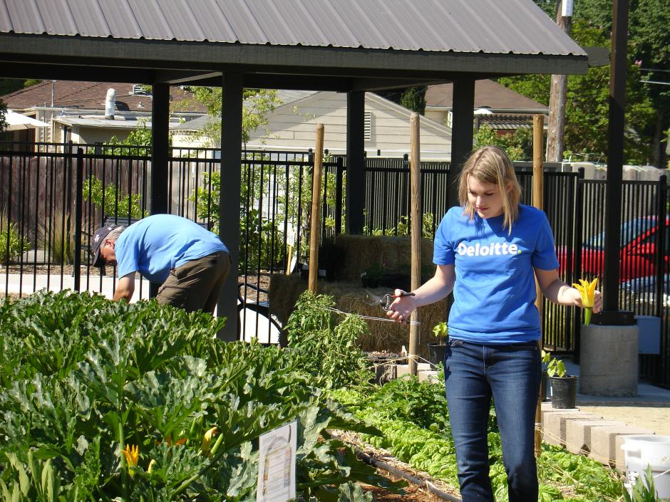 Deloitte IMPACT Day Volunteers help out at the garden at Sacramento Food Bank & Family Services.